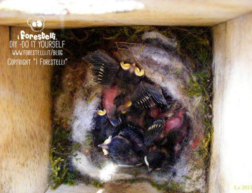 Come trovare i nidi degli uccelli selvatici